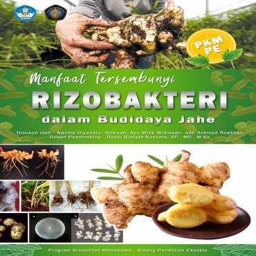 Manfaat Tersembunyi Rizobakteri dalam Budidaya Jahe